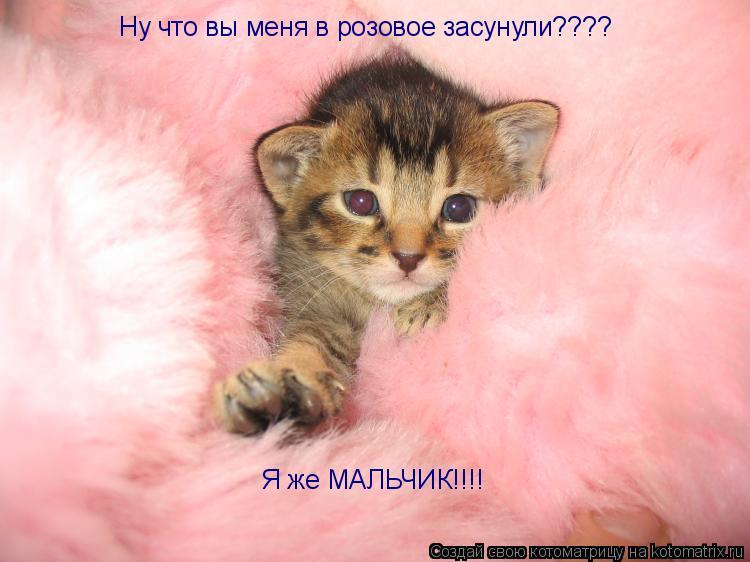 Котоматрица: Ну что вы меня в розовое засунули???? Я же МАЛЬЧИК!!!!