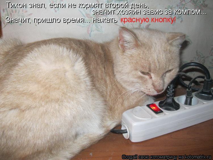 Котоматрица: Тихон знал, если не кормят второй день, значит хозяин завис за компом... Значит, пришло время... нажать  красную кнопку!