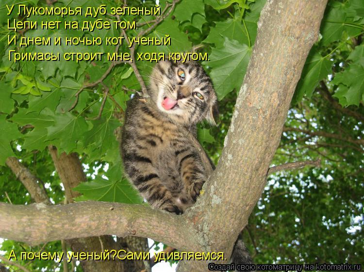 Котоматрица: У Лукоморья дуб зеленый Цепи нет на дубе том. И днем и ночью кот ученый Гримасы строит мне, ходя кругом. А почему ученый?Сами удивляемся.
