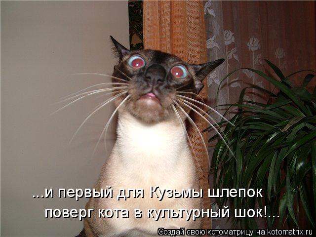 Котоматрица: ...и первый для Кузьмы шлепок поверг кота в культурный шок!...