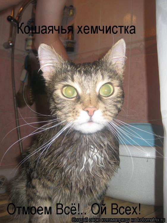 Котоматрица: Кошаячья хемчистка Отмоем Всё!.. Ой Всех!
