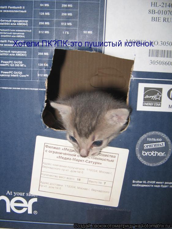 Котоматрица: Хотели ПК?ПК-это пушистый котёнок.