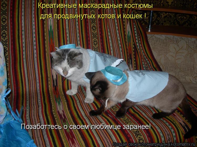 Котоматрица: Креативные маскарадные костюмы для продвинутых котов и кошек ! Позаботтесь о своем любимце заранее!