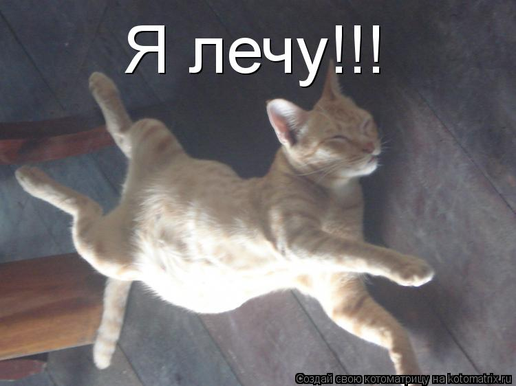 Котоматрица: Я лечу!!!