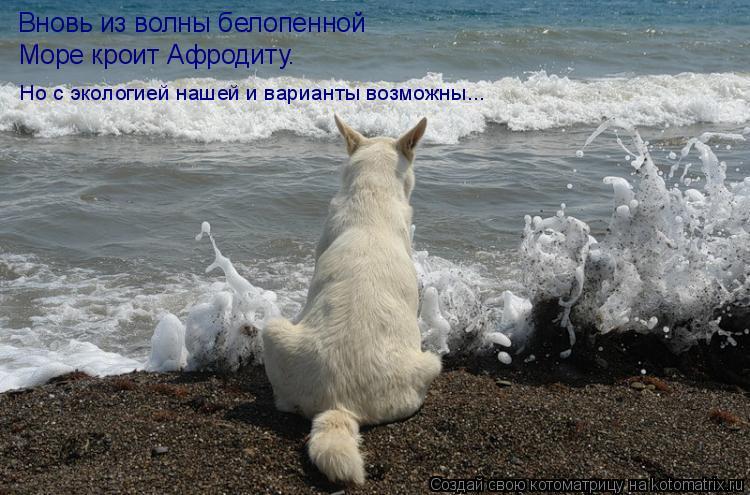 Котоматрица: Вновь из волны белопенной Море кроит Афродиту. Но с экологией нашей и варианты возможны...
