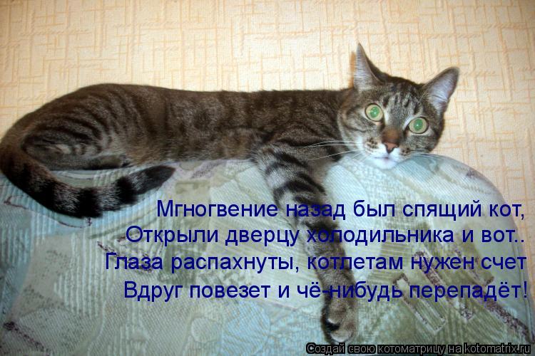 Котоматрица: Мгногвение назад был спящий кот,  Открыли дверцу холодильника и вот.. Глаза распахнуты, котлетам нужен счет Вдруг повезет и чё-нибудь перепа