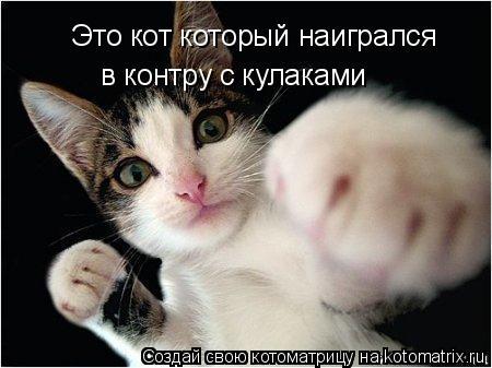 Котоматрица: Это кот который наигрался  в контру с кулаками