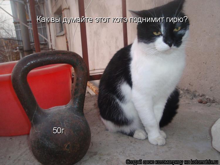 Котоматрица: Как вы думайте этот котэ поднимит гирю? 50г