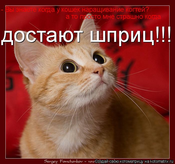 Котоматрица: - Вы знаете когда у кошек наращивание когтей? а то просто мне страшно когда достают шприц!!!