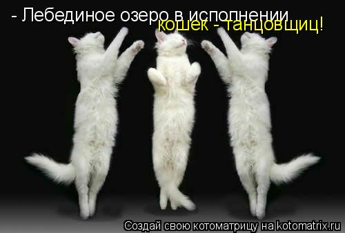 Котоматрица: - Лебединое озеро в исполнении  кошек - танцовщиц!