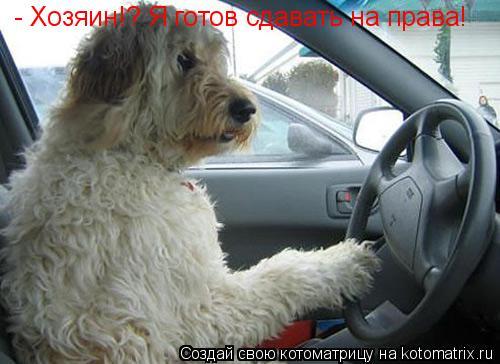 Котоматрица: - Хозяин!? Я готов сдавать на права!