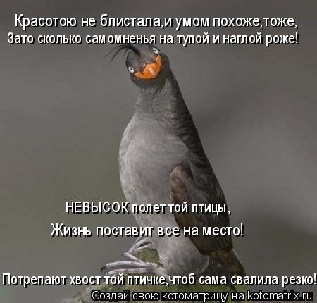 Котоматрица: Красотою не блистала,и умом похоже,тоже, Зато сколько самомненья на тупой и наглой роже! НЕВЫСОК полет той птицы, Жизнь поставит все на мест