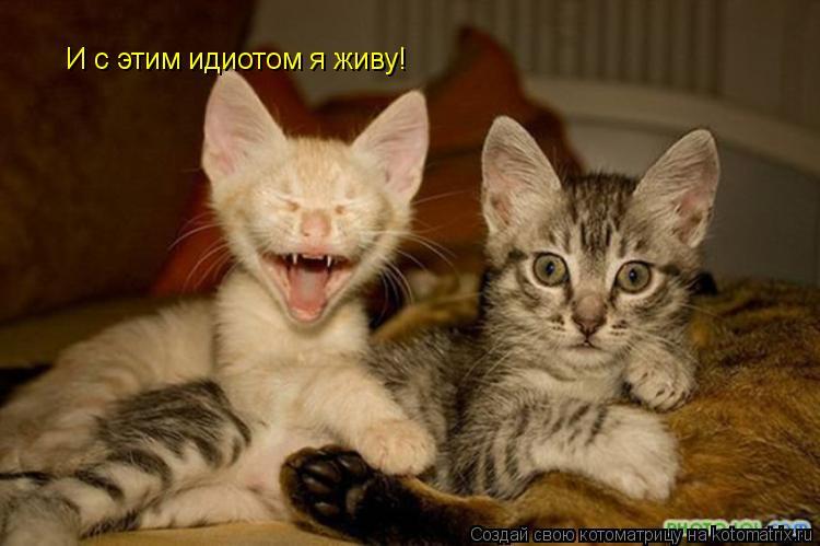 Котоматрица: И с этим идиотом я живу!
