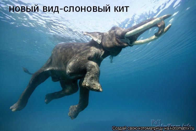 Котоматрица: новый вид-слоновый кит