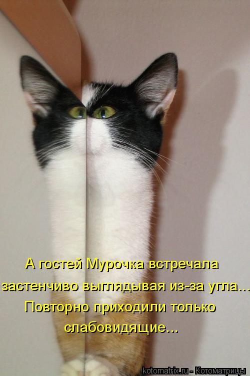 Котоматрица: А гостей Мурочка встречала  застенчиво выглядывая из-за угла... Повторно приходили только  слабовидящие...