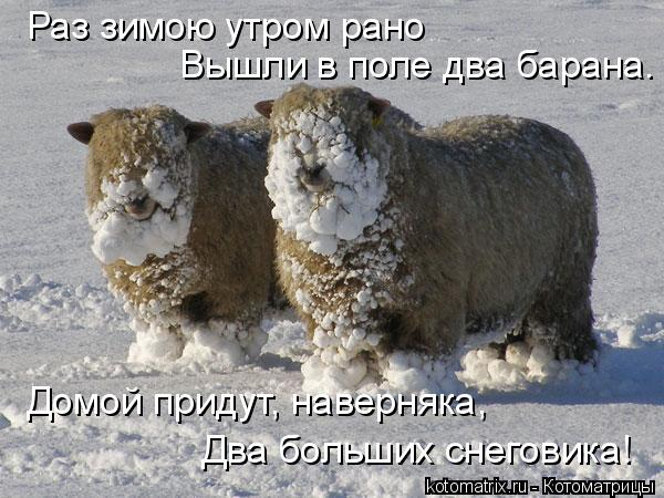 Котоматрица: Раз зимою утром рано Вышли в поле два барана. Домой придут, наверняка, Два больших снеговика!
