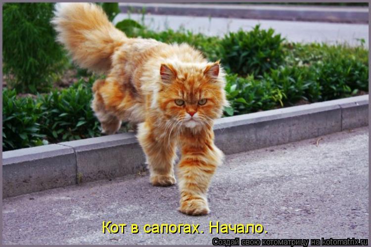 Котоматрица: Кот в сапогах. Начало.