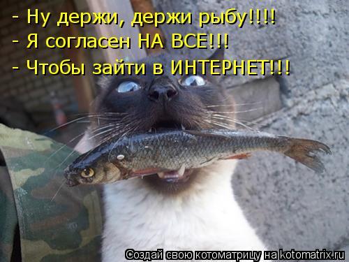Котоматрица: - Ну держи, держи рыбу!!!! - Я согласен НА ВСЕ!!!   - Чтобы зайти в ИНТЕРНЕТ!!!