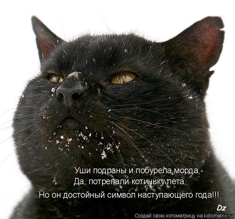 Котоматрица: Уши подраны и побурела морда,- Да, потрепали котиньку лета, Но он достойный символ наступающего года!!!