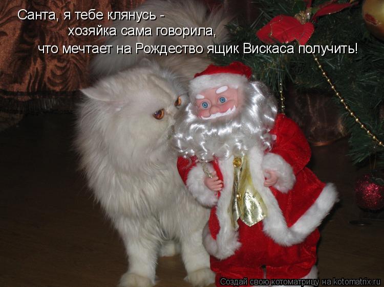 Котоматрица: Санта, я тебе клянусь - хозяйка сама говорила, что мечтает на Рождество ящик Вискаса получить!