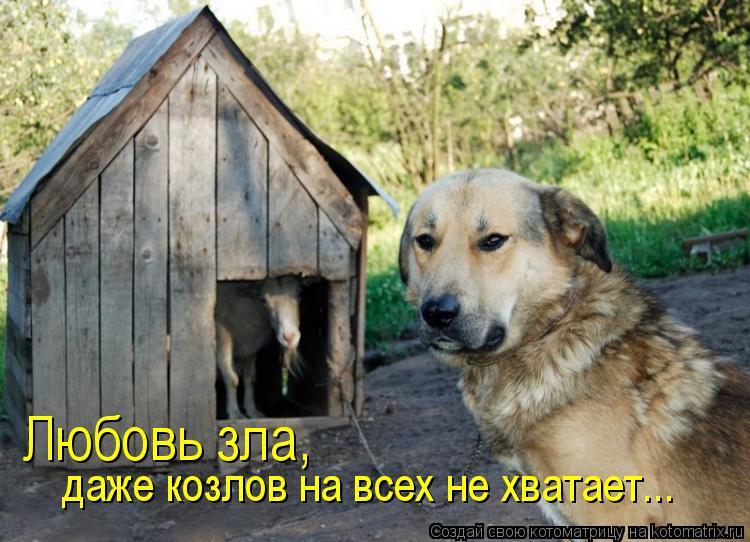 Котоматрица: Любовь зла,  даже козлов на всех не хватает...