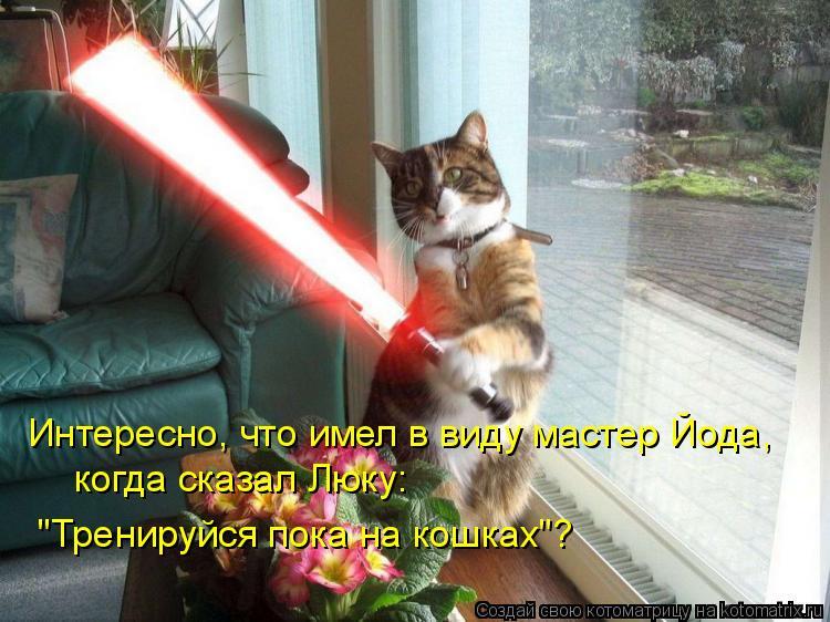 """Котоматрица: Интересно, что имел в виду мастер Йода, когда сказал Люку: """"Тренируйся пока на кошках""""?"""