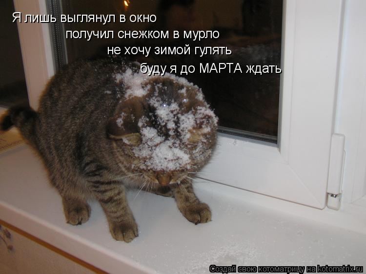 Котоматрица: Я лишь выглянул в окно получил снежком в мурло не хочу зимой гулять буду я до МАРТА ждать
