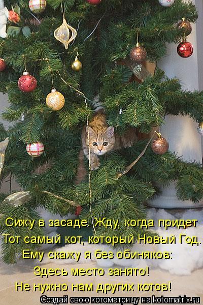 Котоматрица: Сижу в засаде. Жду, когда придет Тот самый кот, который Новый Год. Ему скажу я без обиняков: Здесь место занято! Не нужно нам других котов!