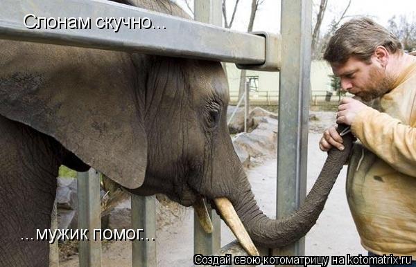 Котоматрица: Слонам скучно... ...мужик помог...