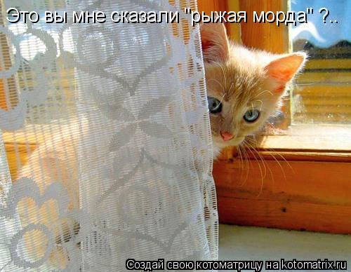 """Котоматрица: Это вы мне сказали """"рыжая морда"""" ?.."""