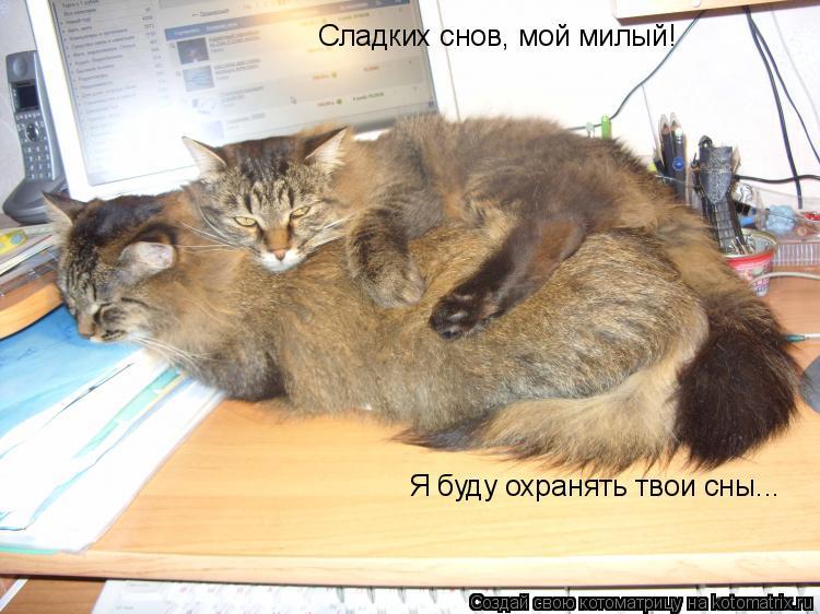Котоматрица: Сладких снов, мой милый! Я буду охранять твои сны...