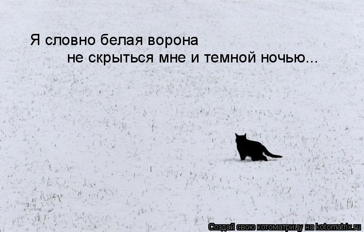 Котоматрица: Я словно белая ворона не скрыться мне и темной ночью...