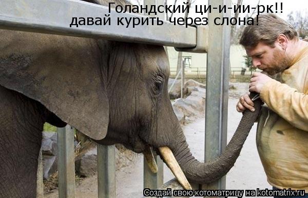 Котоматрица: Голандский ци-и-ии-рк!! давай курить через слона!