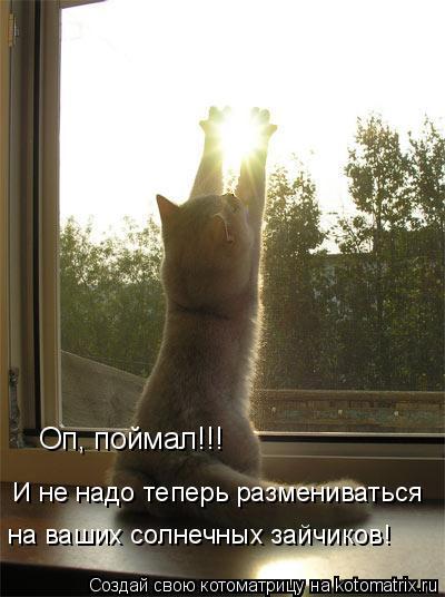 Котоматрица: Оп, поймал!!! И не надо теперь размениваться на ваших солнечных зайчиков!