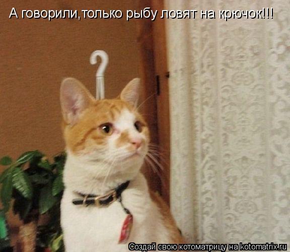 Котоматрица: А говорили,только рыбу ловят на крючок!!!