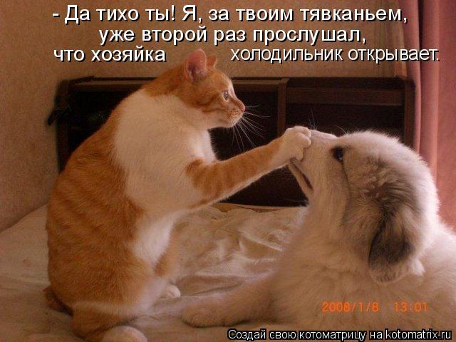 Котоматрица: - Да тихо ты! Я, за твоим тявканьем, уже второй раз прослушал, что хозяйка  холодильник открывает.