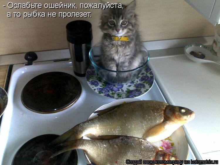 Котоматрица: - Ослабьте ошейник, пожалуйста, а то рыбка не пролезет.