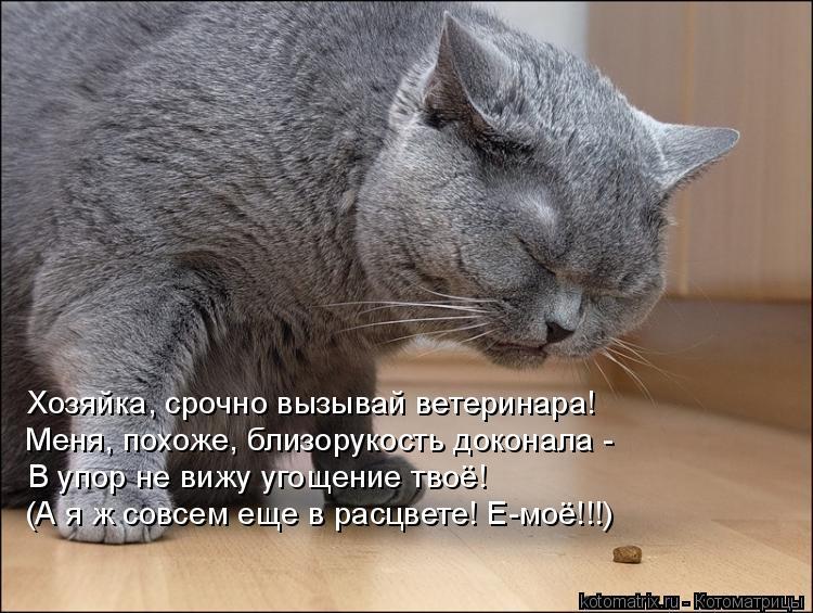 Котоматрица: Хозяйка, срочно вызывай ветеринара! Меня, похоже, близорукость доконала -  В упор не вижу угощение твоё! (А я ж совсем еще в расцвете! Е-моё!!!)