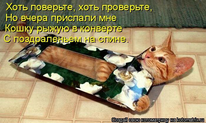 Котоматрица: Хоть поверьте, хоть проверьте, Но вчера прислали мне Кошку рыжую в конверте С поздраленьем на спине.