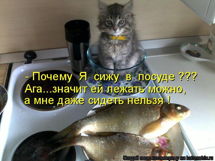- Почему  Я  сижу  в  посуде ??? Ага...значит ей лежать можно, а мне д