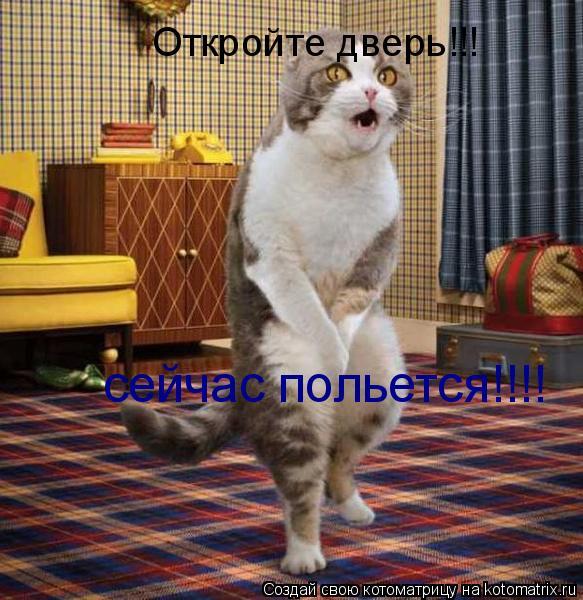 Котоматрица: Откройте дверь!!! сейчас польется!!!!