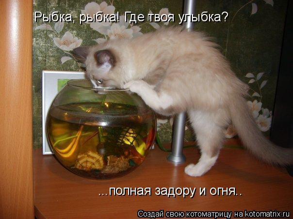 Котоматрица: Рыбка, рыбка! Где твоя улыбка? ...полная задору и огня..