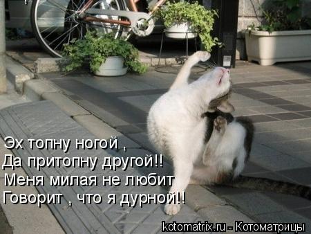 Котоматрица: , Да притопну другой!! Меня милая не любит Эх топну ногой , Говорит , что я дурной!!