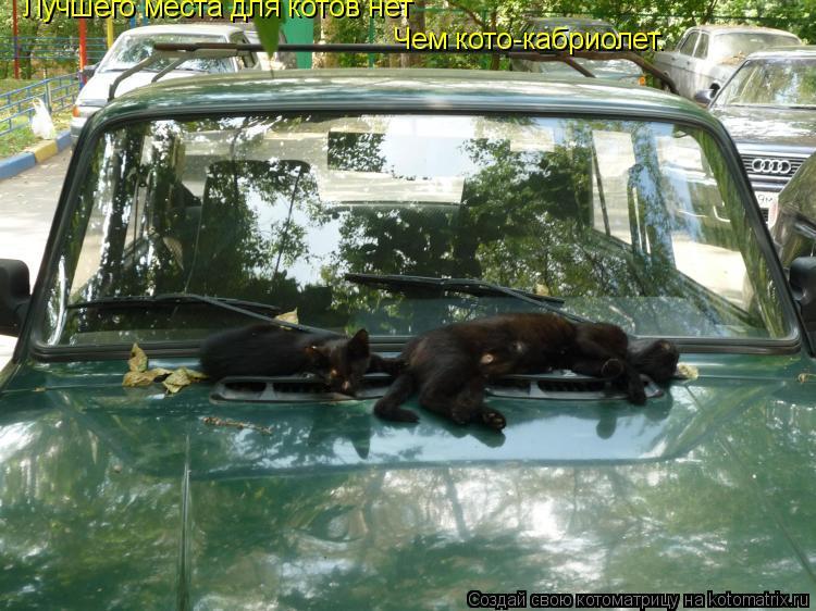 Котоматрица: Лучшего места для котов нет Чем кото-кабриолет.