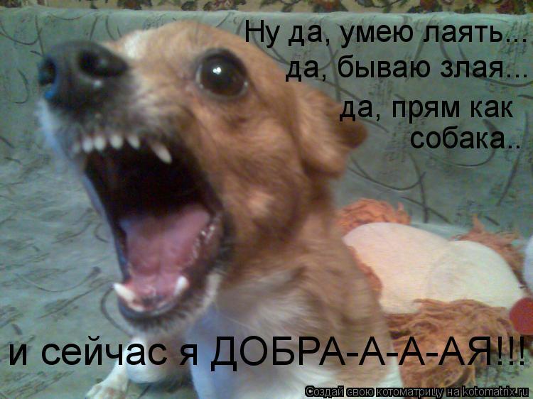 Котоматрица: да, бываю злая... собака.. да, прям как  Ну да, умею лаять... и сейчас я ДОБРА-А-А-АЯ!!!