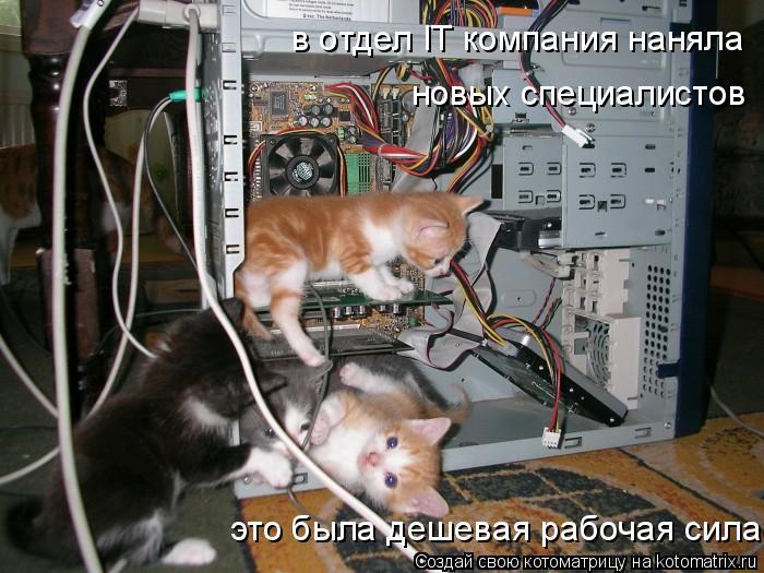 Котоматрица: в отдел IT компания наняла новых специалистов это была дешевая рабочая сила