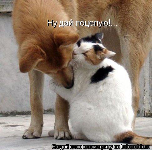 Котоматрица: Ну дай поцелую!...