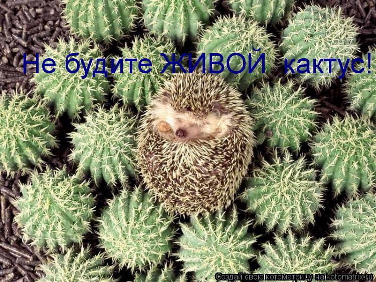 Котоматрица: Не будите ЖИВОЙ  кактус!