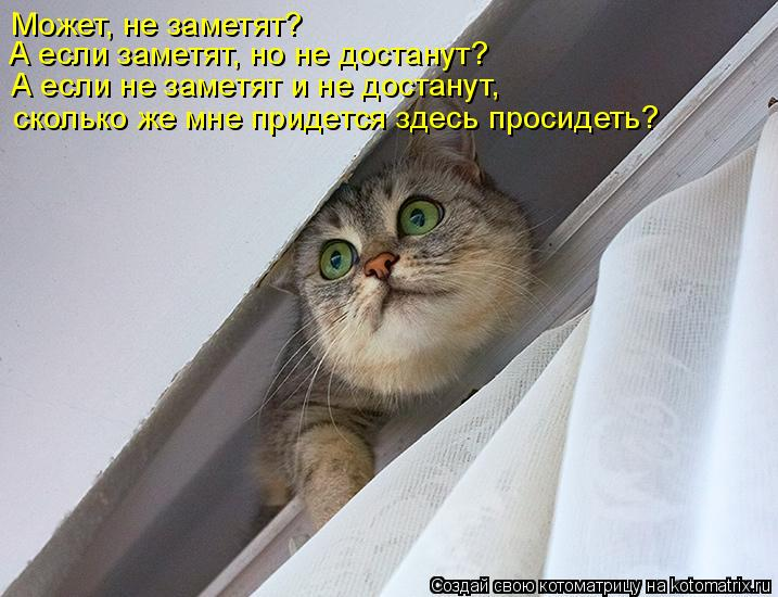 Котоматрица: сколько же мне придется здесь просидеть? Может, не заметят? А если не заметят и не достанут,  А если заметят, но не достанут?