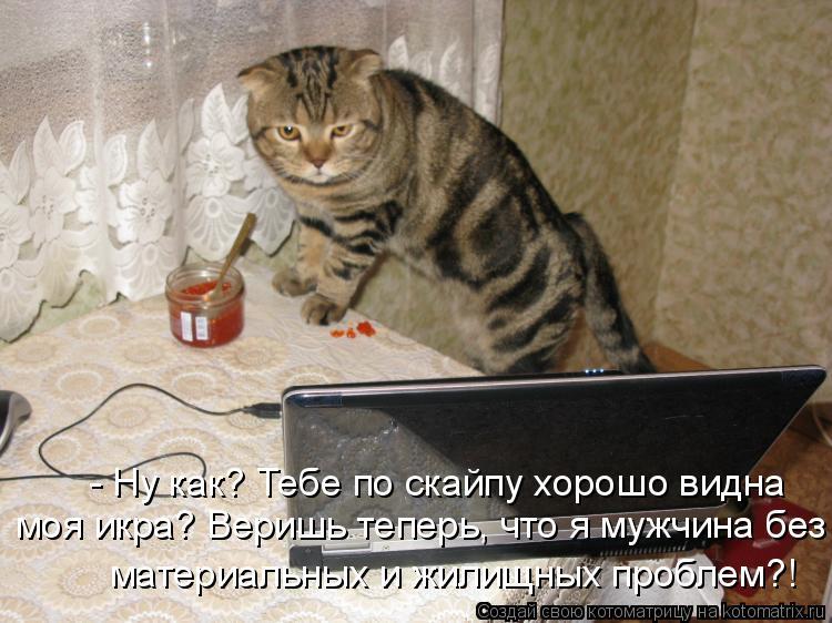 Котоматрица: - Ну как? Тебе по скайпу хорошо видна  моя икра? Веришь теперь, что я мужчина без материальных и жилищных проблем?!